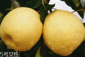 梨子是热性仍是凉性生果?肠胃欠好不克不及吃梨
